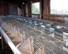 Jaulas Para Conejos Polivalentes Extrona – Excelente Estado