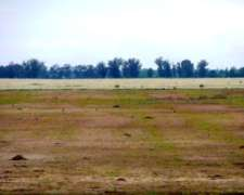 Busco Campo para Arrendar Zona Coronel Vidal