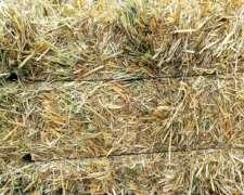Fardos de Pastura Reigrass