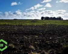 Campo -147 Hectáreas- Papero - Agrícola - San Agustín