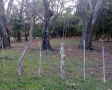 Vendo Campo en Ituzaingo(isla Apipe) Corrientes