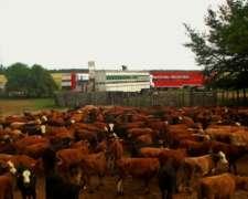 Capitalización-pastoreo en Esquina Corrientes