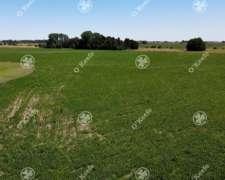 Campo 60 Has 100% Agrícola Sobre Ruta 41 Gral Belgrano