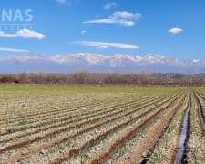 28 Has. Finca en Tupungato, Mendoza Finca en el Peral