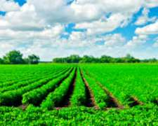 Busco para Soja/maíz Arrendamiento a QQ Fijo o Porcentaje