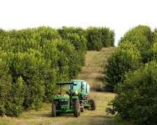 Tractores Utilitarios - 5045e - 45 HP - John Deere
