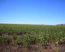 Campo en Venta Nogoyá E. Ríos. 880 Has. con 700 Agrícolas.