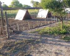 Parideras A Campo Para Cerdos Como Muevas