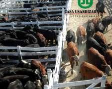 Consignatarios de Hacienda- Mercado de Liniers