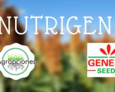 Nutrigen - Sorgo de Semillero Genesis