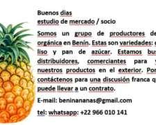 Ananas Mercato Y Partner