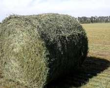 Rollos de Alfalfa Pura