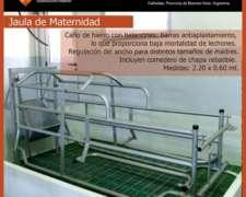 Jaulas de Maternidad con Comedero para Cerdos