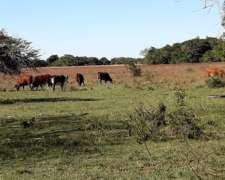 Compro Vacas Invernada en Corrientes