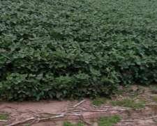 200 Has. -agrícola- Pampayasta SUR (cordoba)