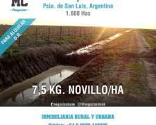 Alquilo Campo en Zanjitas 1600 Has Mcnegocios (3582440235)