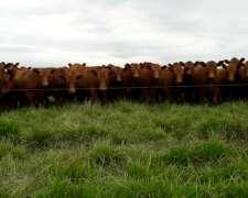 Compro Vacas Vacías Contado a Retirar