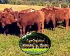 Vendo Terneros - Provincia de Corrientes