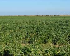 Córdoba. Agro-ganadero. 500 Has