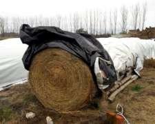 Rollos de Alfalfa de Primera: 450/500 KG.
