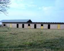 Lp0130 Venta Ganadero 8000 Has Caleu Caleu, la Pampa