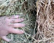 Megafardos de Alfalfa y de Moha