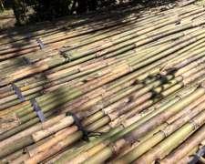 Cañas y Cañones de Bambú para Quinta
