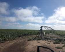 1.200 Has en Salto, Prov. BS. AS. - Agricola C/riego - Venta