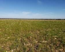 107 Has. Agricola-ganadero en Perdices (gualeguaychu)
