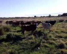 Vendo Vaca Manufactura e Invernada