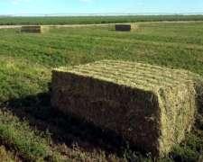 Mega Fardos de Alfalfa - Lasna Insumos - MÍN 20/28 TNS