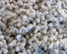 Algodón - Semilla de Algodon - Disponible