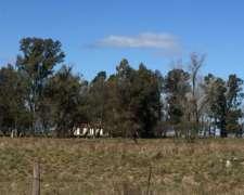 Vendo en Olavarría, 200 Has de Campo Ganadero Sobre Ruta