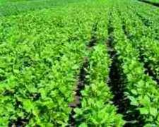 Campo Agric. 7.900 Has Todo Agric las Lajitas-salta