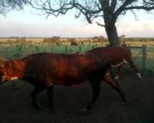 Vendo 32 Vacas Nuevas Con Servicio