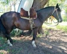 Varios Caballos Potros 1/2 Doma y Yeguas