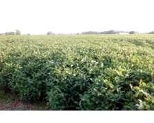 Campo en Venta en San Antonio de Areco. 455 Has. Agrícola.