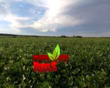 700 Hectareas Mixtas 75 % Agrícolas en Rio Negro - Uruguay
