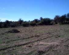 Campo 47 Ha Mixtas en la Cocha San Luis