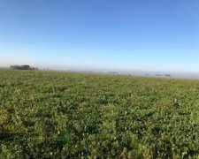 Campo 296 Has Agricolas