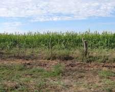 700 Has en Alpachiri la Pampa S/ Ruta Asfaltada