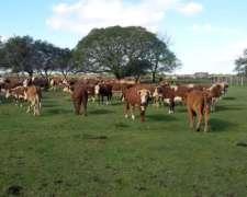 120 De Vacas De Inverada
