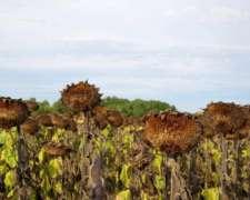 Vendo 670 H Agricolas Excelente con Feedlot Santa Rosa la PA