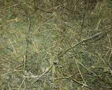 Fardos De Alfalfa De Alfalfa