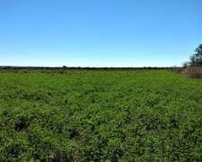 Campo Agricola con Riego