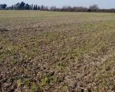 Compro Campo 100% Agricola a Dueño Directo