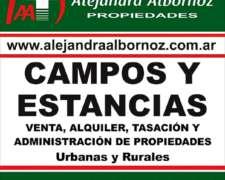 Alejandra Albornoz Vende Zona Pellegrini