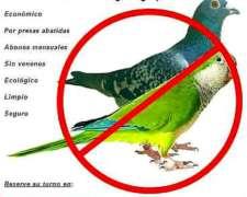 Control de Plagas (palomas y Cotorras)