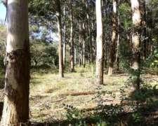 Campo Forestal en Venta