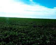 770 Has. Agrícolas en Urdinarrain - Entre Ríos